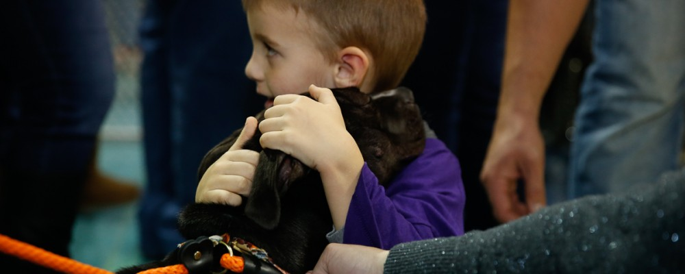 chicago wolves pet adoption