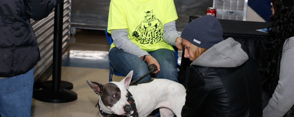 dog adoption at allstate arena