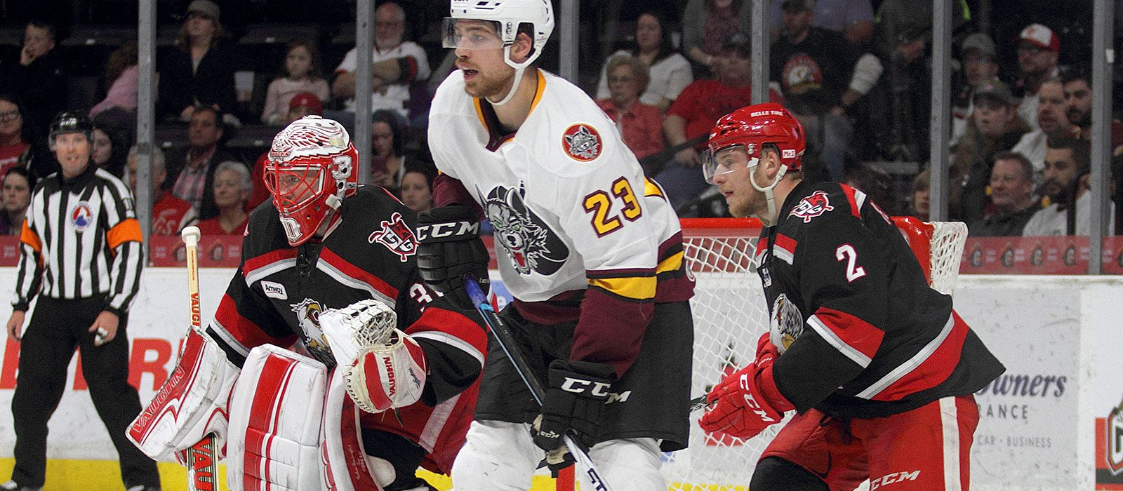 Chicago Wolves Roundup