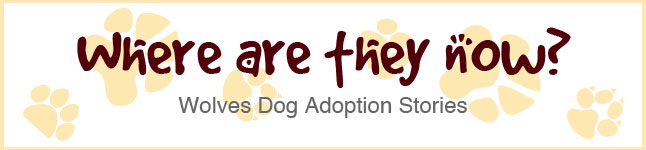 Where are they now? Click to read adoption stories.